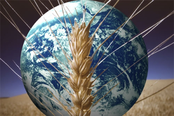 Nakarmimy świat 2